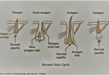 Golden Pulse Laser Clinic - Hair Growth Cycle